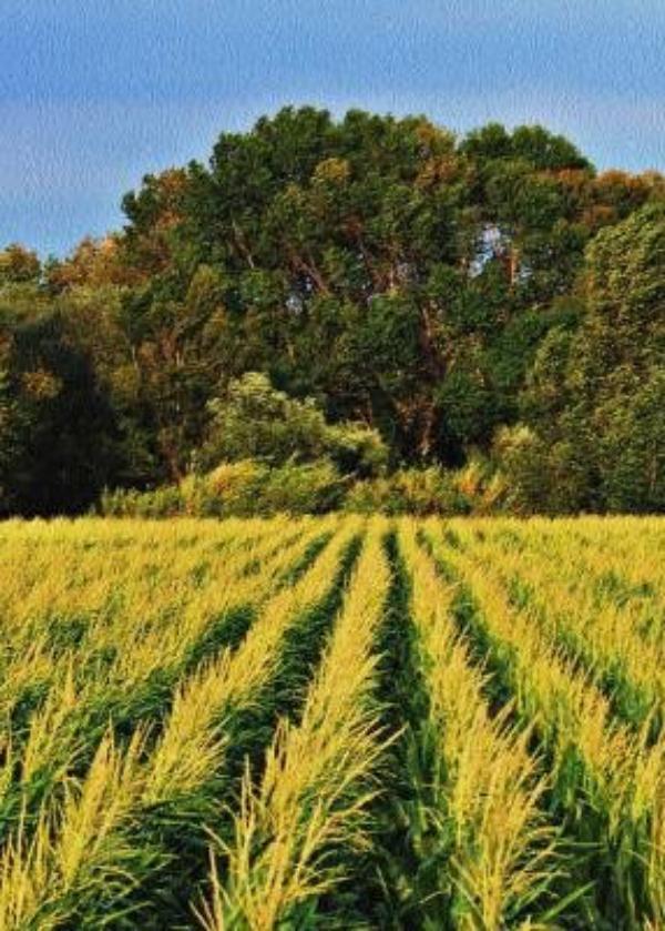 Un nuevo proyecto de eficiencia energética permite mejorar la agricultura de Funes