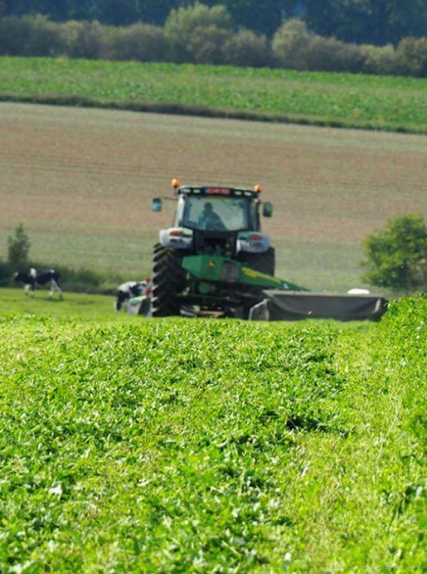 Los cinco mandamientos para alcanzar un sistema alimentario sostenible en 2050