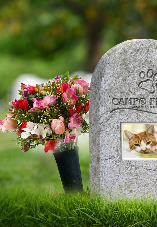 Madrid apoya el enterramiento de mascotas cuando no exista peligro para la salud pública