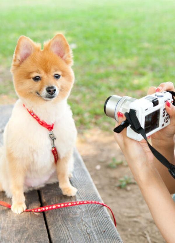 El ICOVV lanza un concurso fotográfico dedicado a nuestras mascotas