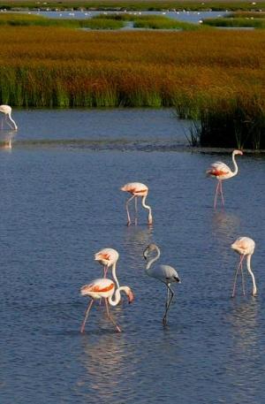 Alarma en Doñana: mala gestión de sus aguas