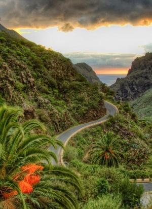Tenerife. Eliminan tóxicos que ponen en riesgo el ecosistema