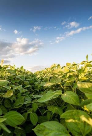 La agricultura ecológica supone menos gastos de producción