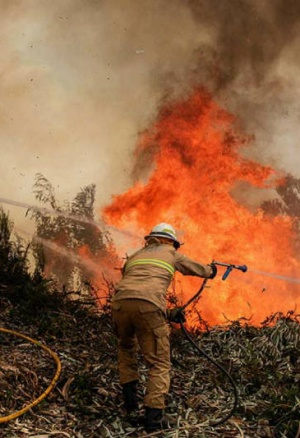 El ser humano es el causante del 96% de los incendios