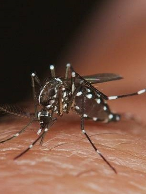 Cambio climático, enfermedades, y una plaga de mosquitos