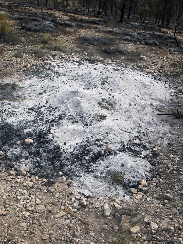 La Guardia Civil investiga al presunto autor del incendio de cerca de 4 hectáreas de monte en Lorca