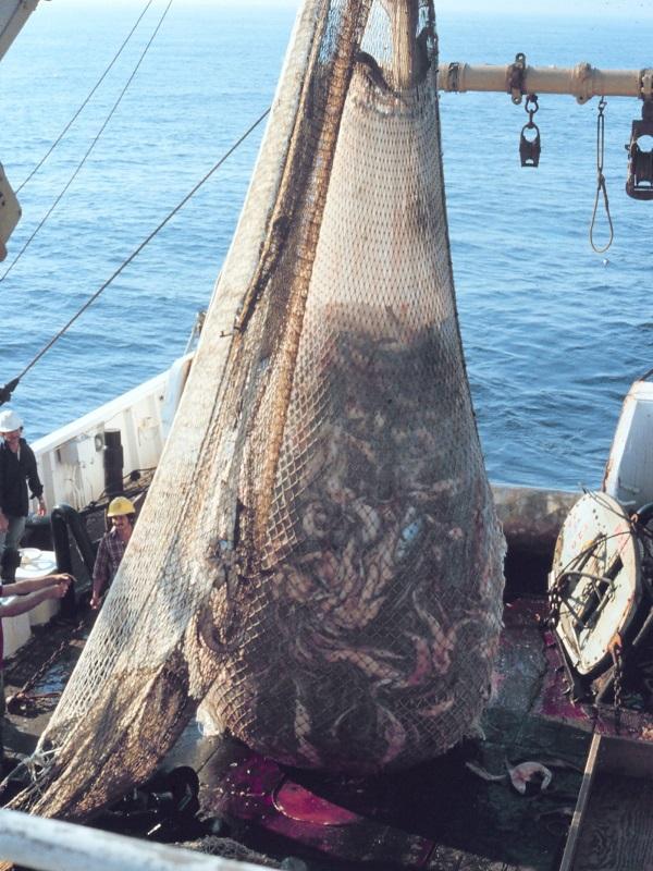 Los europarlamentarios españoles se ponen de perfil para conservar los océanos