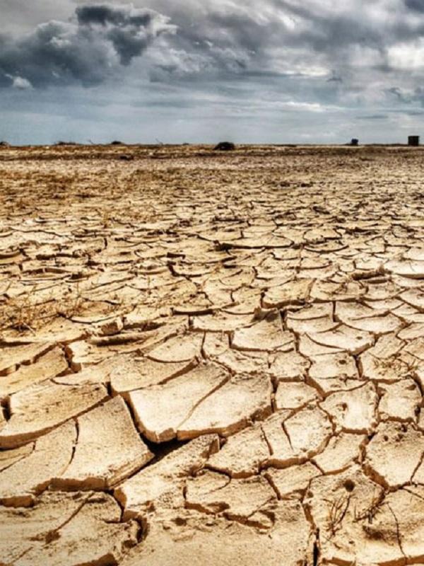 El cambio climático merma la cantidad de micronutrientes esenciales para la vida