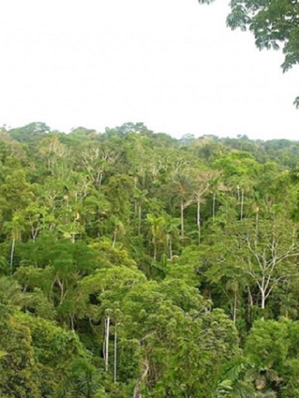 ¿Qué es ecología y qué es ecologismo?
