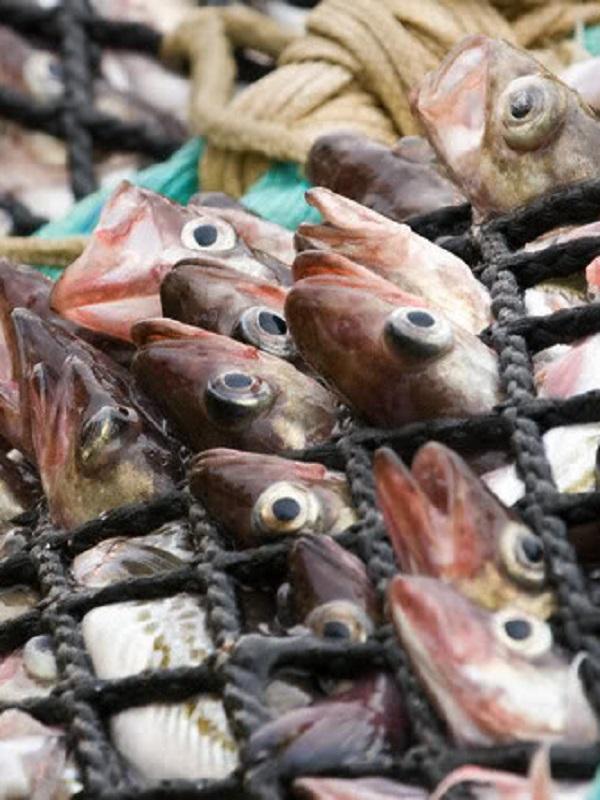 ¿Qué regiones a nivel del Planeta sufren la explotación abusiva de especies?