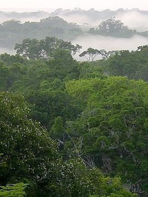 Los humanos ya domesticaron árboles amazónicos en época precolonial