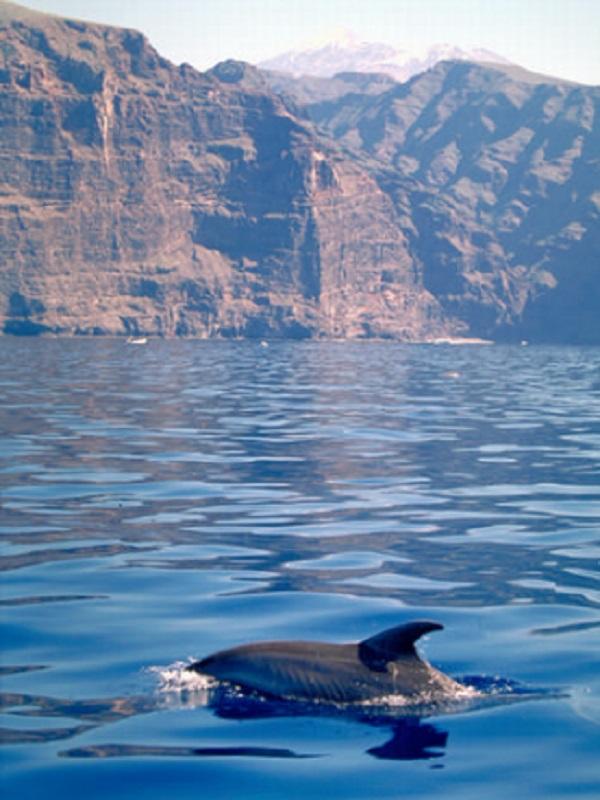 Piden la limitación de las licencias para la observación de cetáceos en Canarias