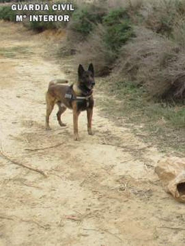 La Guardia Civil investiga a una persona en Fraga por causar la muerte de dos perros con veneno