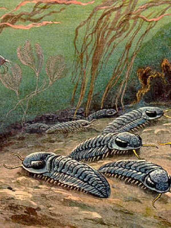 Diez millones de años, mínimo para superar una extinción masiva
