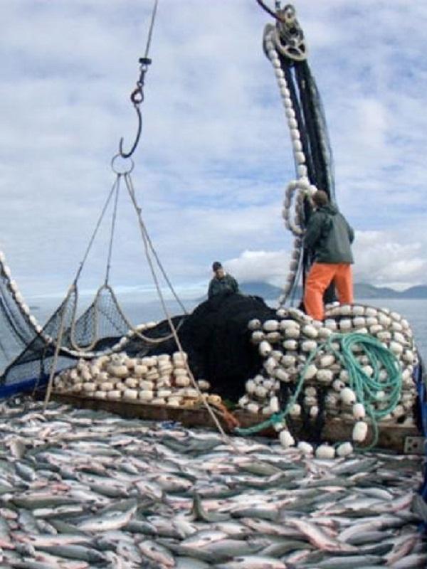 ¿Cómo afectará el cambio climático a los atunes?