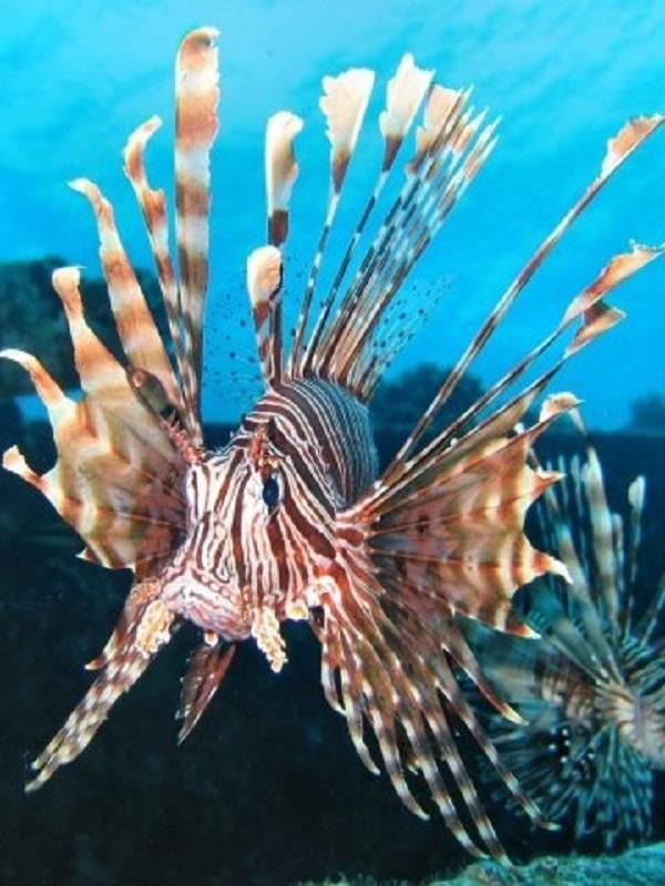 Especies exóticas marinas, las grandes desconocidas