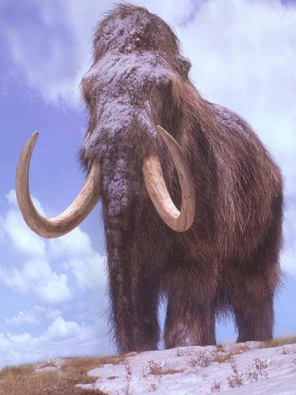 Neandertales y mamuts compartieron adaptaciones genéticas al frío