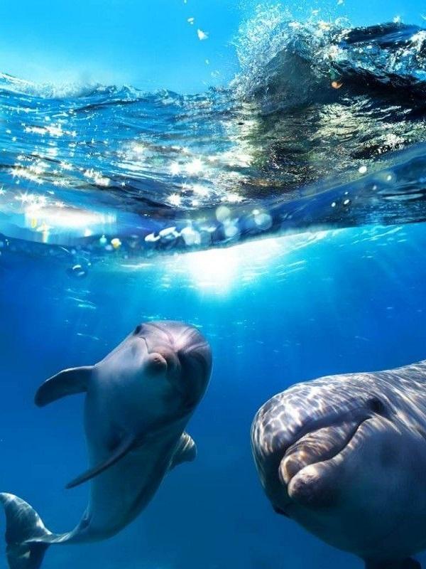 Los delfines, aquí y allá, atiborrados de contaminantes