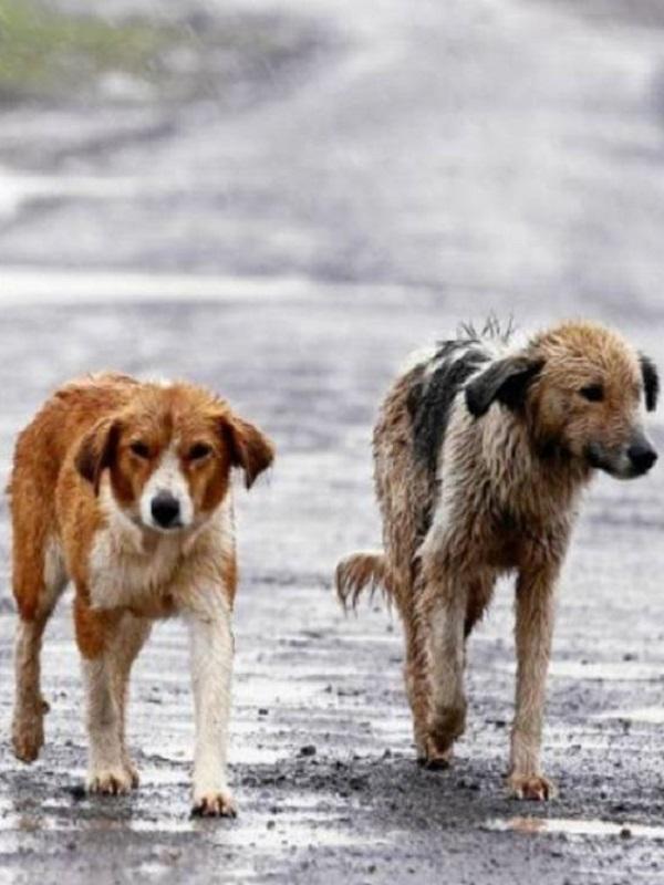 En Semana Santa se dispara el abandono de mascotas