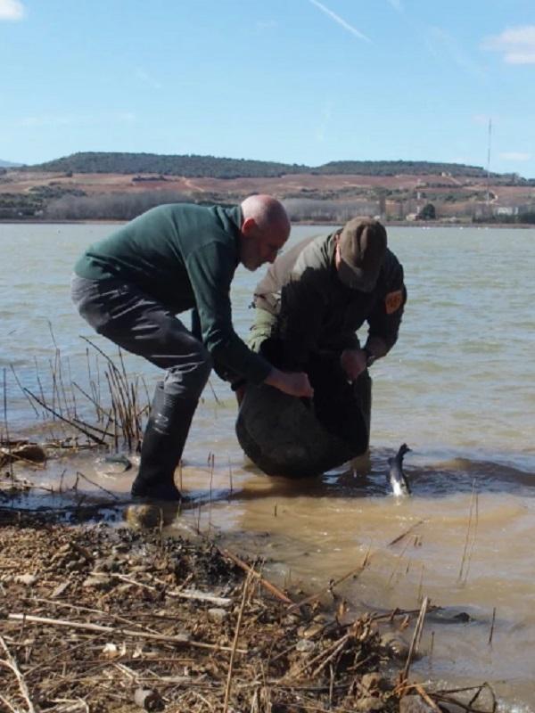 La Comunidad de Madrid regulará la suelta de trucha de arcoíris esterilizadas para la pesca