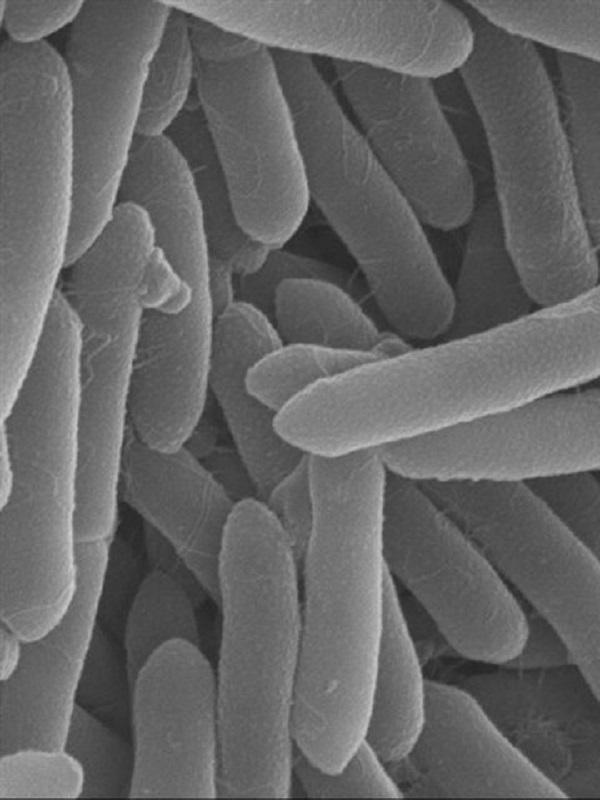 Bacterias que comen petróleo proliferan en la Fosa de las Marianas