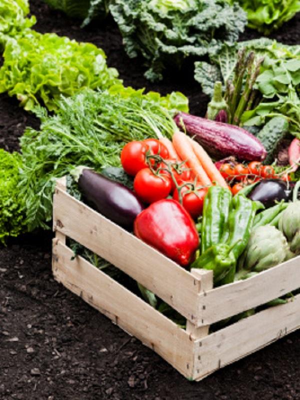 Agroecología, todo son ventajas