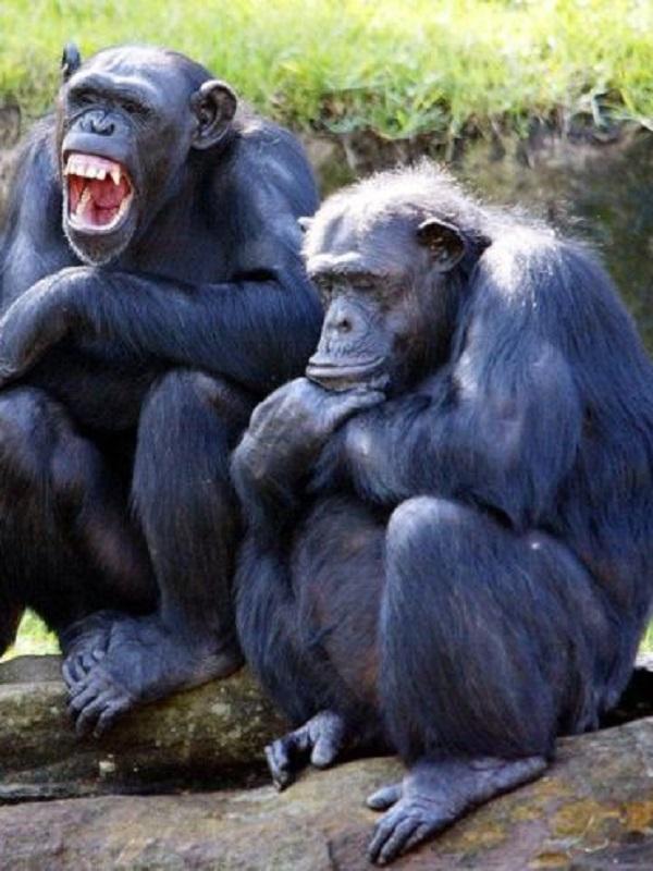 Primates, el tamaño no importa, o sí