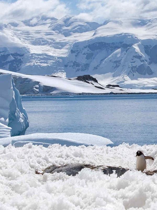Vientos cálidos pueden colapsar la plataforma de hielo Larsen C