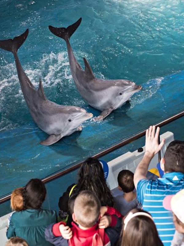 Los lobbies internacionales de zoos y acuarios blanquean su oscuro funcionamiento