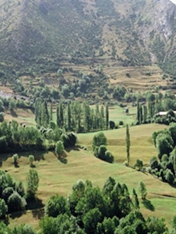 ADELPA reclama promover la ganadería de montaña como herramienta para preservar el paisaje pirenaico y el medio rural