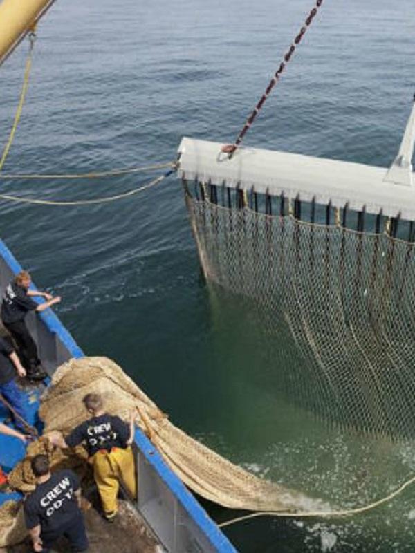 Europa da luz verde a la normativa que prohíbe la pesca eléctrica a partir de julio de 2021