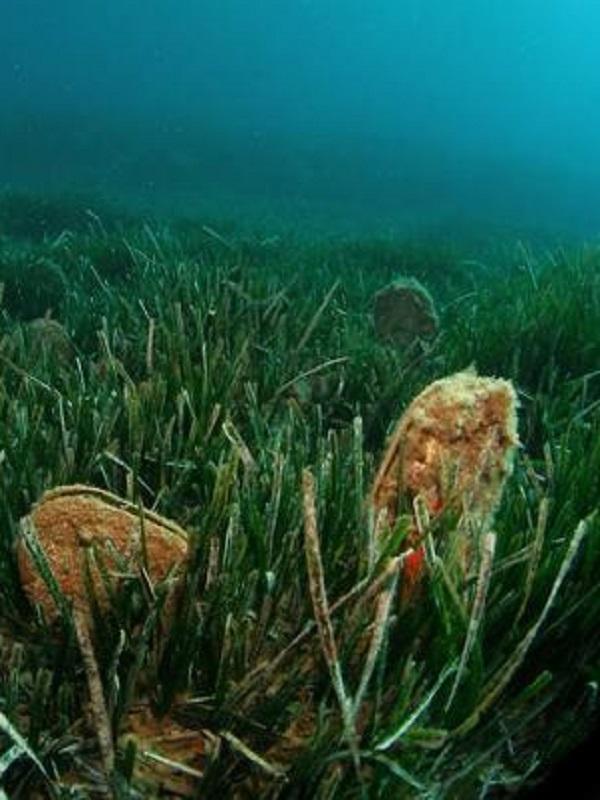 Una exposición con 30 fotografías muestra la riqueza de la flora y fauna submarinas del Mar Menor