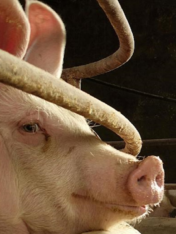 Desalojados 126 ecologistas por ocupar un matadero en Riudellots de la Selva (Girona)