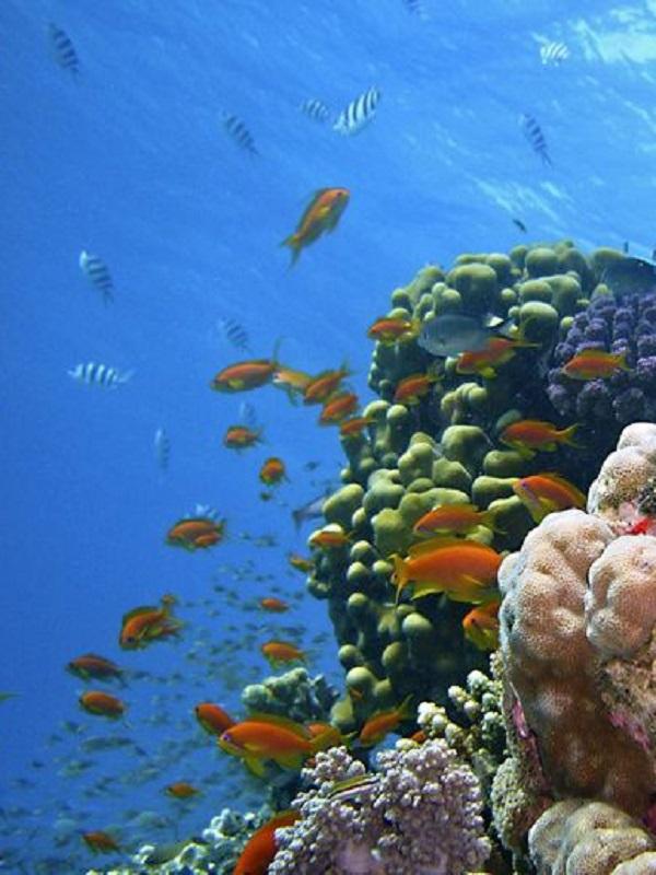 ONU Medio Ambiente lanza una guía práctica para la mejor gestión de las áreas marinas protegidas