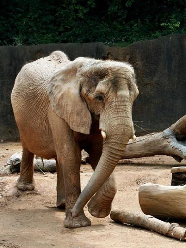 Los zoos podrían transmitir bacterias resistentes a los medicamentos
