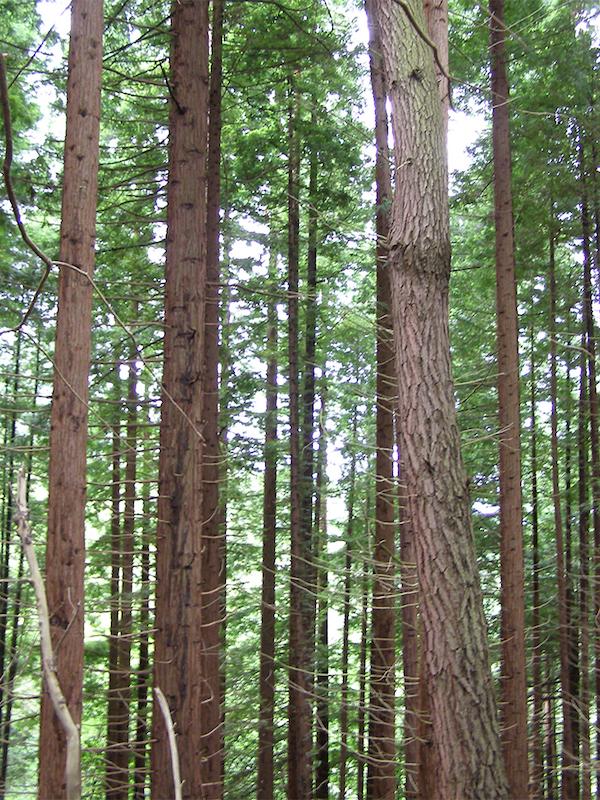 La 'fantasmada' de Albert Rivera que afirma que va a plantar 500 millones de árboles