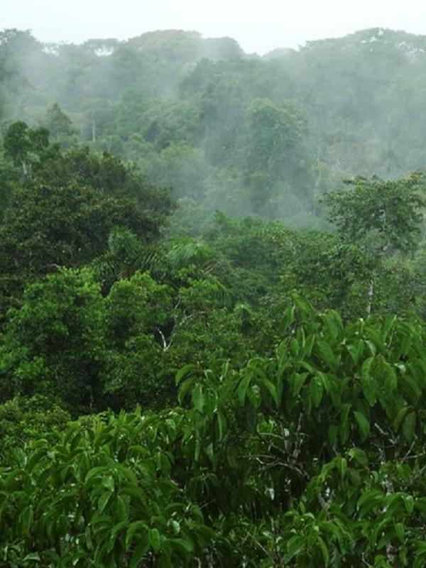 Un multimillonario ofrece 1.000 millones de dólares para proteger el 30% del planeta