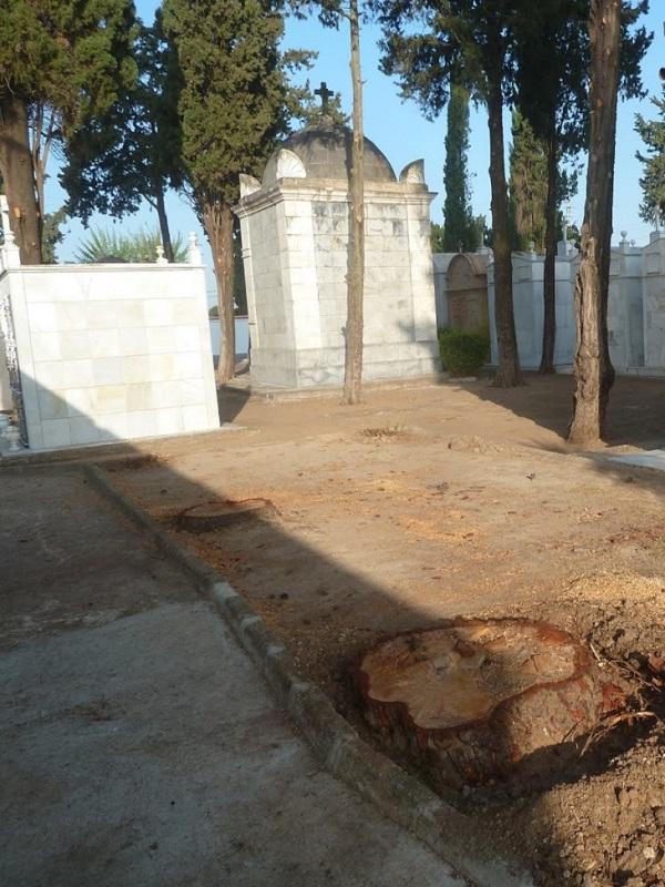 Sevilla. Tala injustificada de árboles centenarios en Tocina y Los Rosales