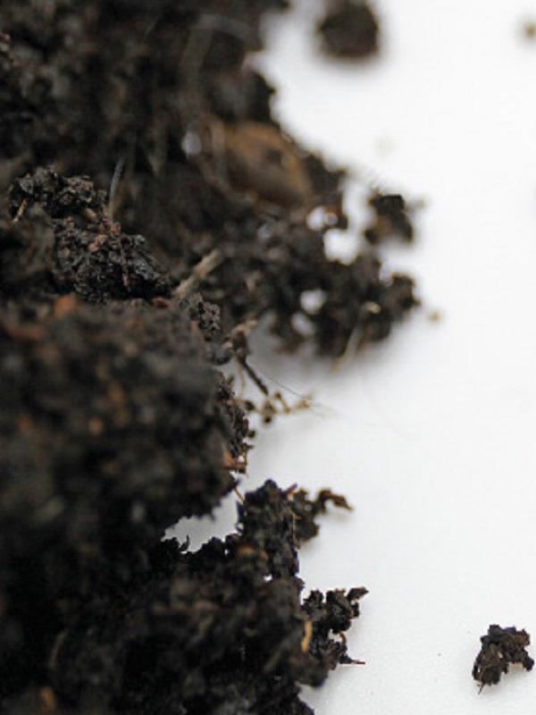Simposio Mundial sobre la 'erosión del suelo'