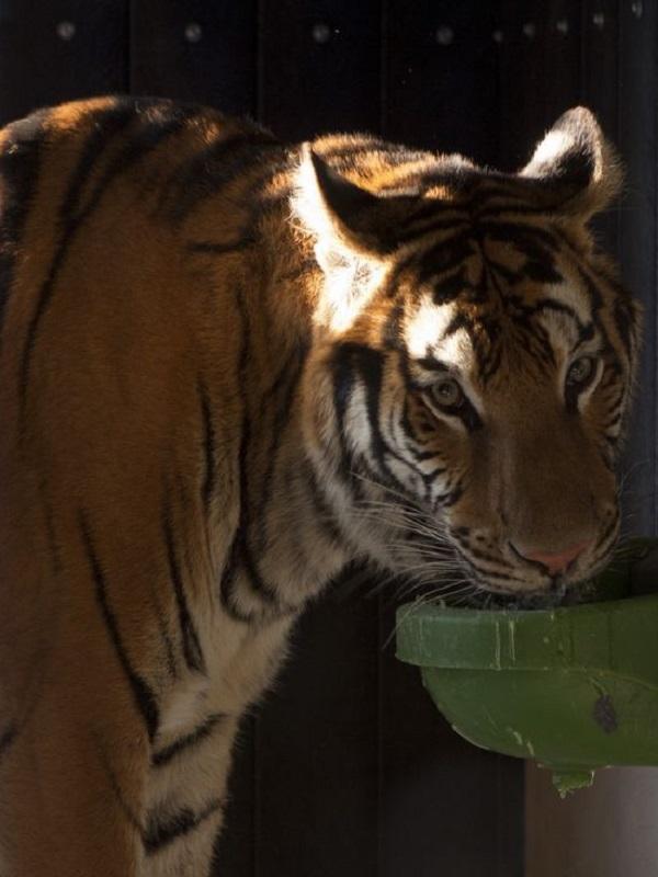 Por fin, los Circos con animales se quedan sin subvenciones