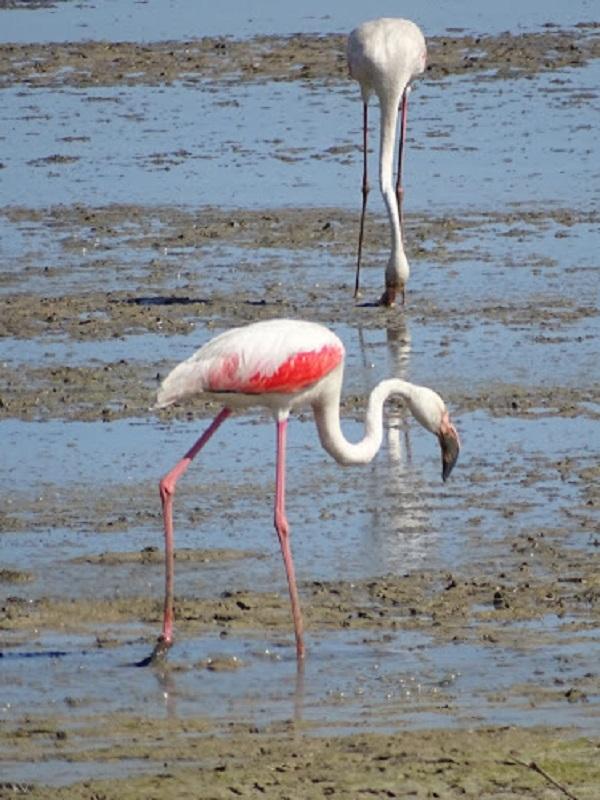 Extremadura promociona el sur de la región como destino de naturaleza en la Feria de las Aves de Doñana
