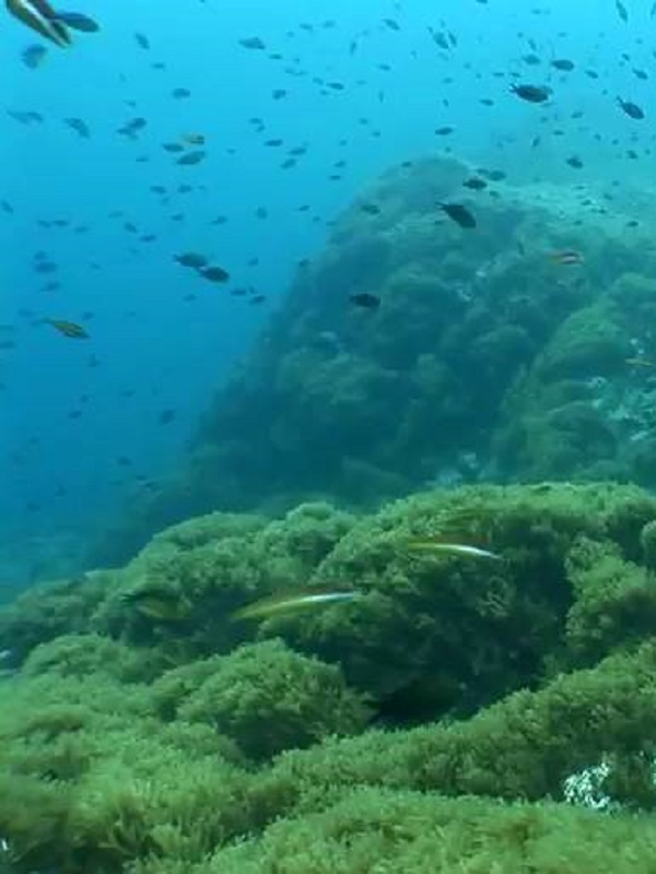 Reclaman un 'acuerdo de París' para frenar la acidificación oceánica