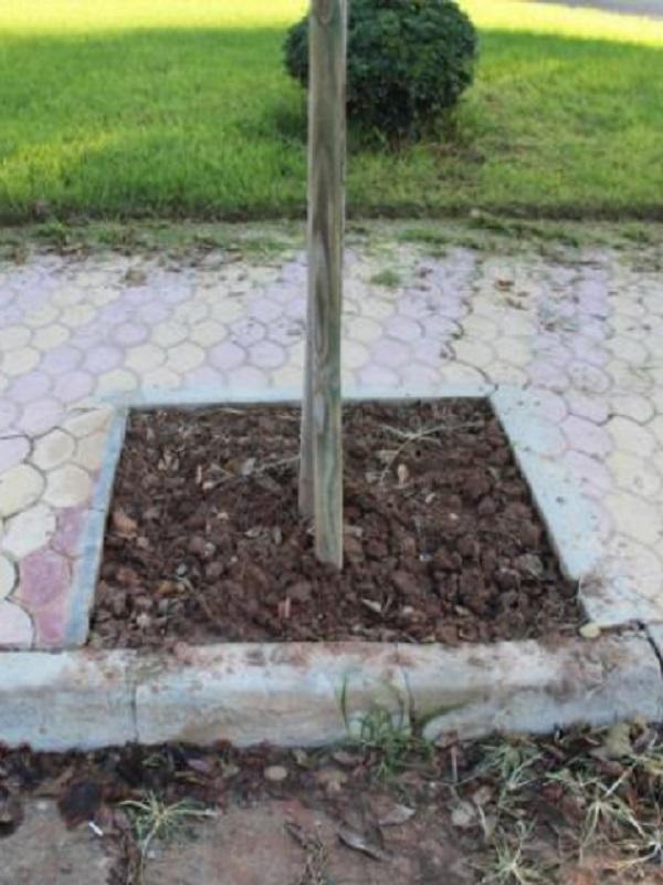 Este alcornoque se planta ante los herbicidas