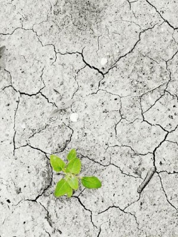 Los jóvenes europeos quieren que se priorice la lucha contra el cambio climáticoº