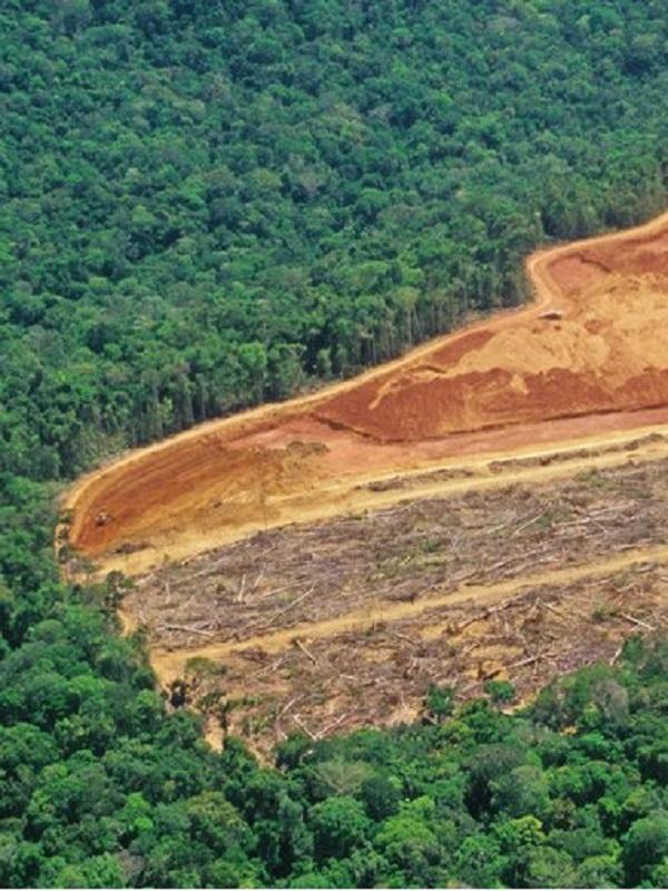 Colombia lanza un plan para contener la deforestación de bosques y selvas