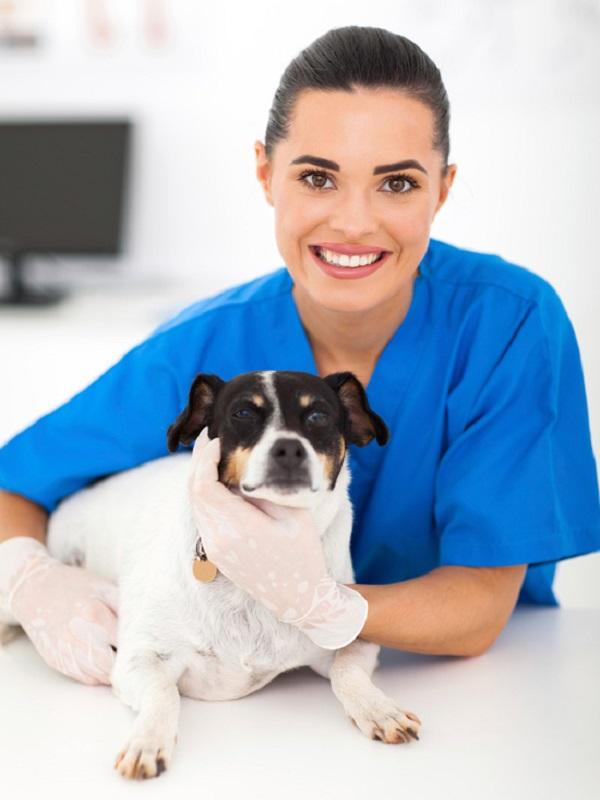 ¿Por qué el auxiliar de veterinaria es imprescindible en las clínicas para el cuidado animal?