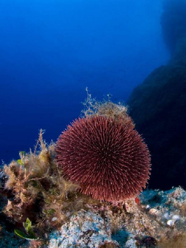 España orgullosa y con razón de su parque nacional marino en Cabrera