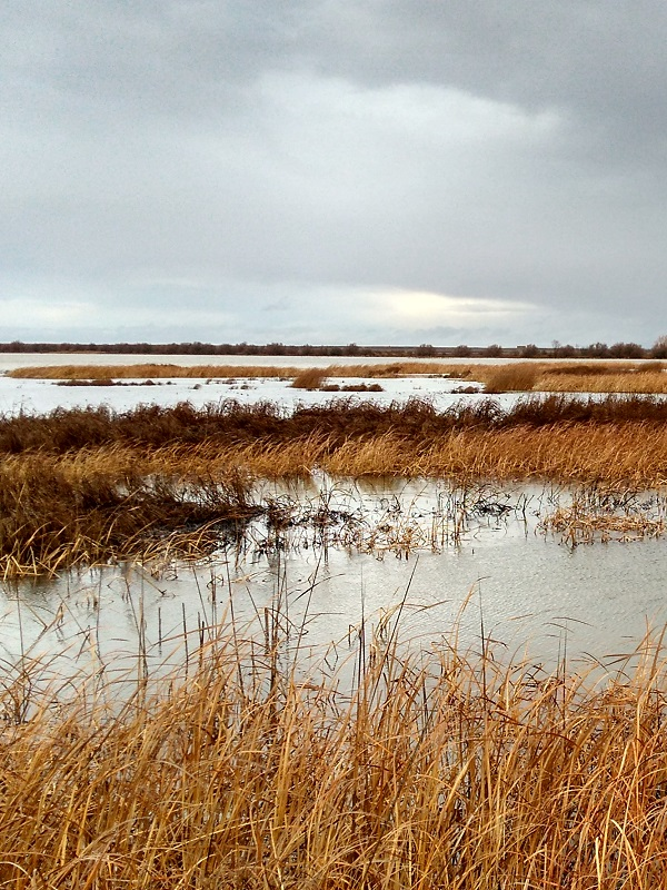 Casi 20.000 hectáreas de humedal se han restaurado en España