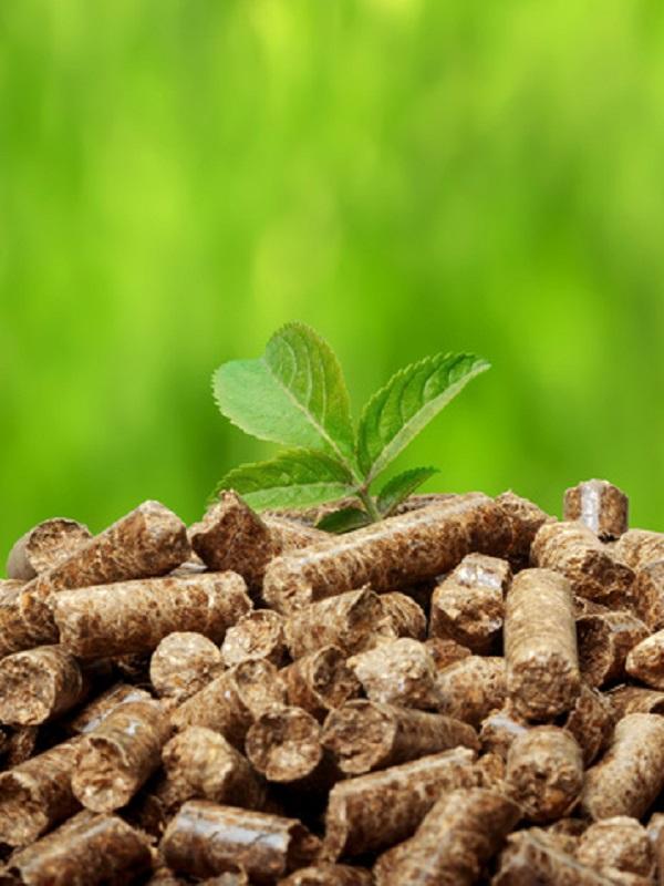 Apoyan la instalación de una planta de biomasa en Degaña (Asturias)