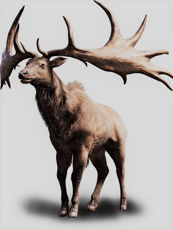 A la rivera del rio Manzanares vivió un ciervo gigantesco